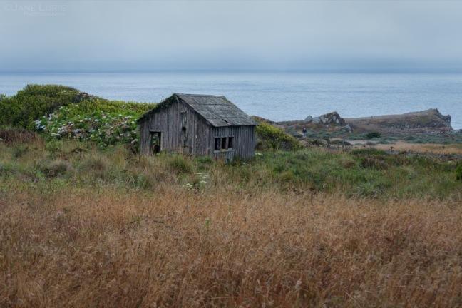 Nature, California, Cypress, Landscape, Path, Nikon, Photography