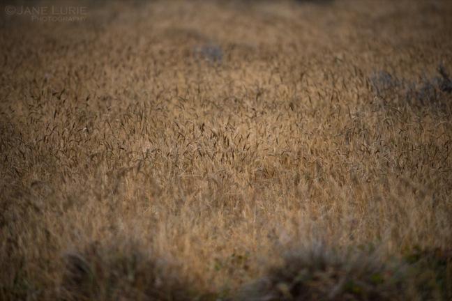 Grasses II