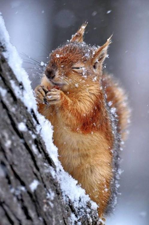 amandaricks.com/blinky-the-squirrel/