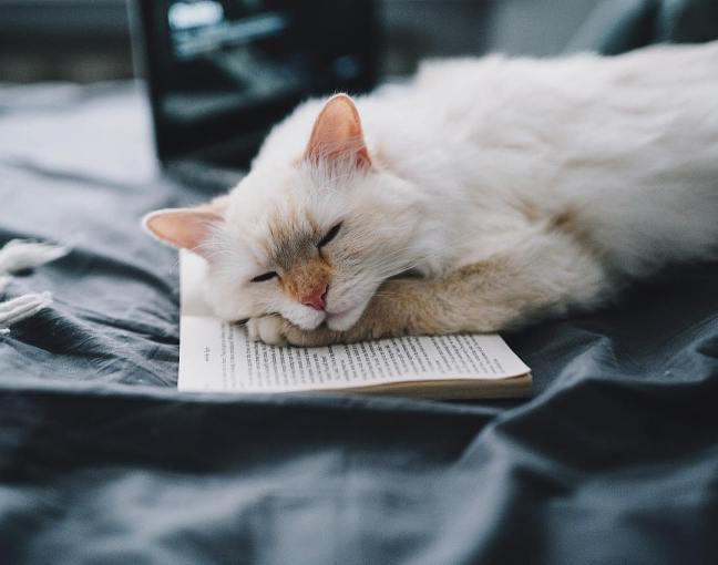 amandaricks.com/fall-asleep-with-good-book/